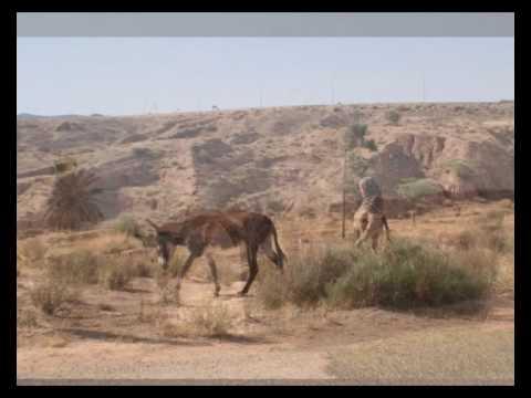 محمد الغمد نص شهيدي بادية جنوب تونس
