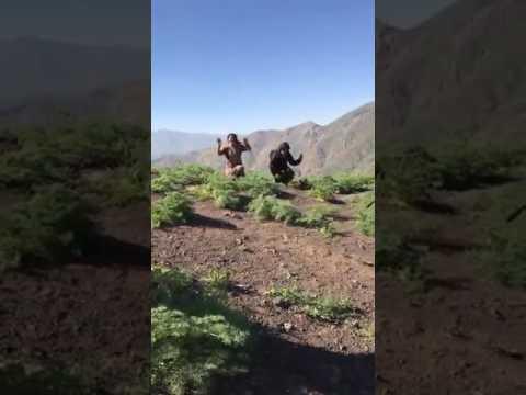 HAKKÂRİ/Şemdinli'de PKK'lı Teröristlerin Teslim Olma Anları