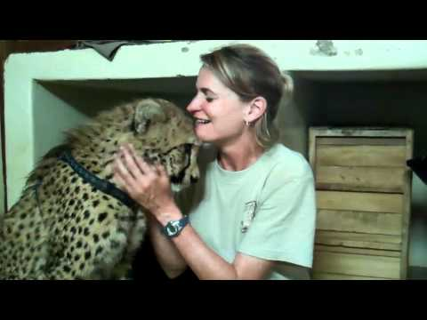 Bullet the Cheetah