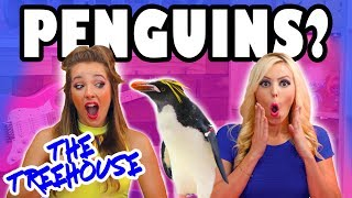 The Treehouse Show for Kids with Penguins, Princess Mystery Box and Wonder Woman on Totally TV