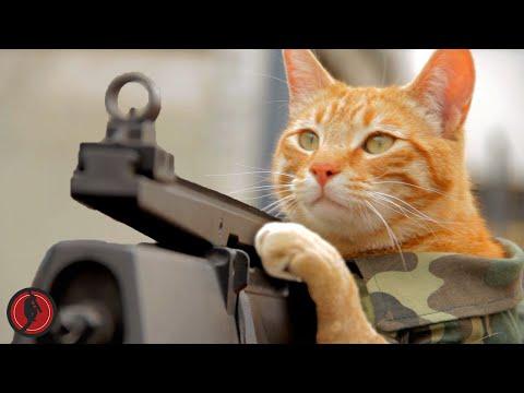 Medal of Honor Cat