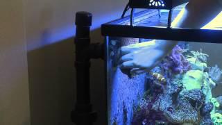 How To Remove Sea Anemones