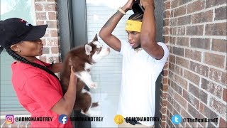 SURPRISING LITTLE BROTHER WITH A DOG!!!