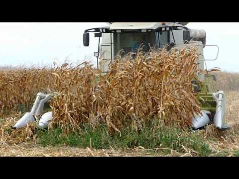 wow the great tri Harvest & unload of corn grains HD video Feira do Milho