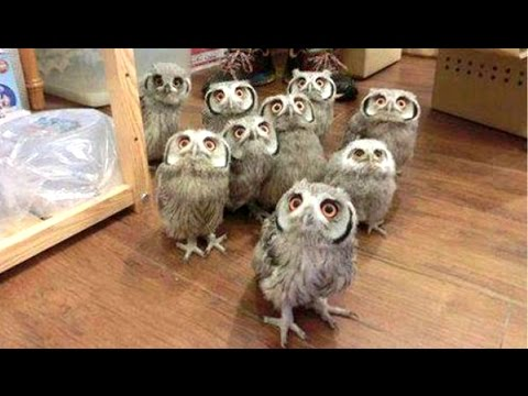 Owl A Funny Owls And Cute Owls Compilation NEW
