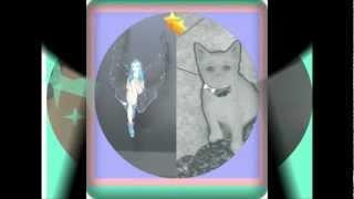 Adriana- F- Noite/video kyra.wmv