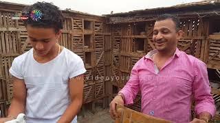 """محاكاة حقيقية لصيد فرخ حمام من أعلى """"غية"""" في مصر"""