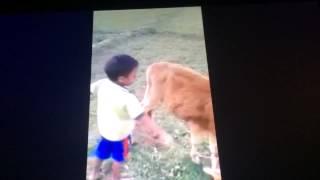 Little Bengali Boy Swearing