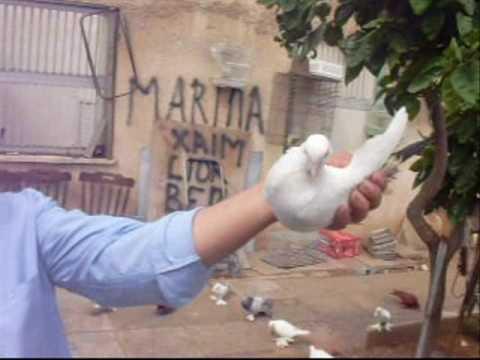 Zakhar s Georgian and Kavkazian Pigeons