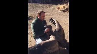 Large Condor Regularly visits Man who saved it's life as a Baby.