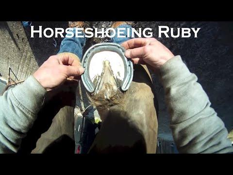 Xxx Mp4 Horse Shoeing Ruby 3gp Sex