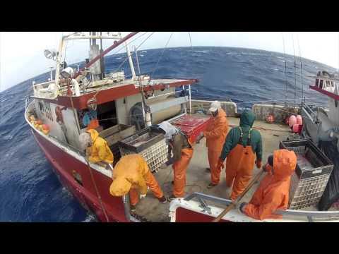 WILD CAUGHT 2012 Sword fishing Documentary