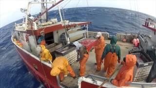 WILD CAUGHT (2012 Sword-fishing Documentary)