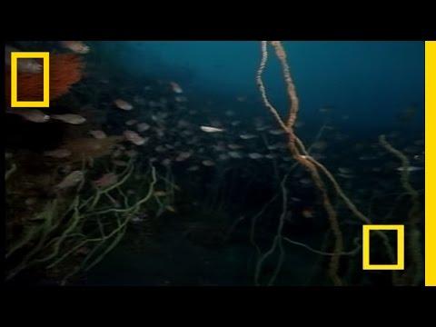 Strange Japanese Sea Creatures
