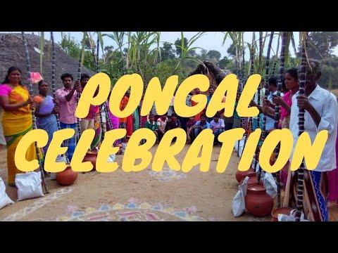 Xxx Mp4 Pongal Celebration Pongal Dance 3gp Sex