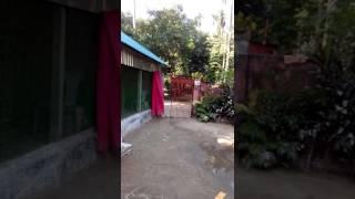 mesu টার্কি মোরগ পোষে মাসে লক্ষ টাকা আয় মিসু(8)