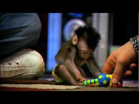 Xxx Mp4 My Monkey Baby 3gp Sex