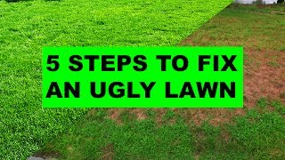How to Fix an Ugly Lawn in 5 Easy Steps