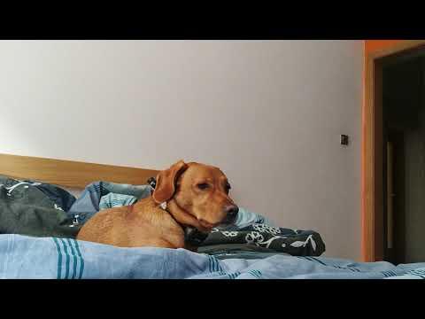 Xxx Mp4 Slepping Dog 3gp Sex