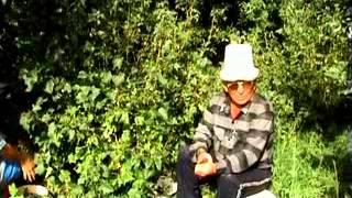 Blackcurrant in Central Asia - черная смородина