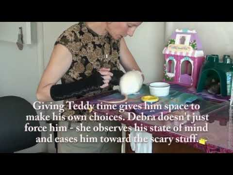 Part 2 of 2: Biting Rat - Familiar Human Picks up Teddy Rat