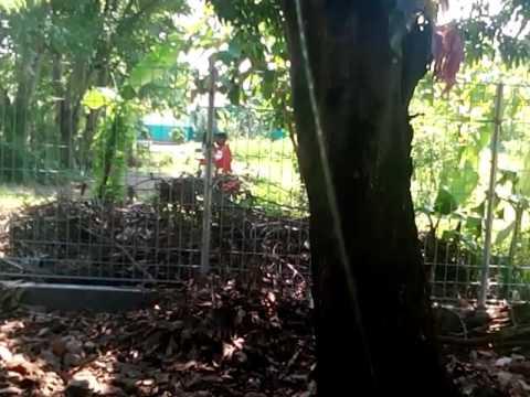 Video mesumm anak smp disaat siang hari .(2)