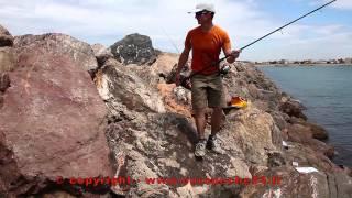 Pêche de daurade (dorade) sur digue : techniques et montages dorades par Europêche34