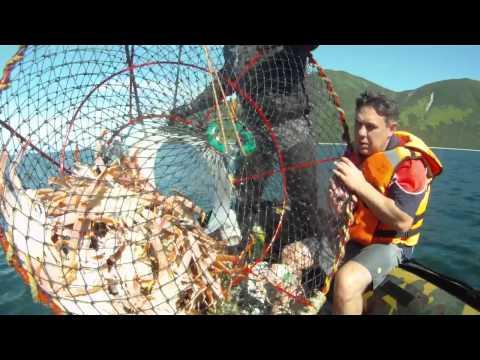 видео ловля крабов