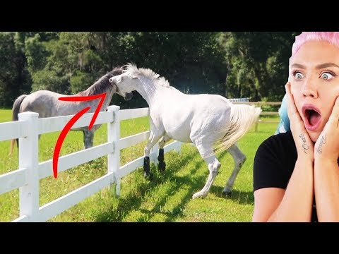 Xxx Mp4 I CANT BELIEVE MY HORSE DID THIS HORSE ATTACK 3gp Sex