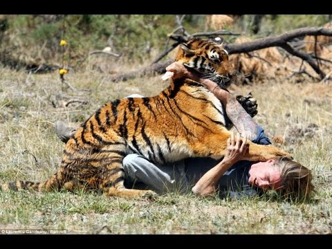 Agresión animal 3 ataque de animales en vivo