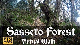 Virtual Walk Through The Enchanting Sasseto Forest in 4K