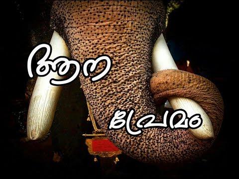 Kashi Thumba Kaavaayi,Aanapremam ,Status Video,Whatsapp,