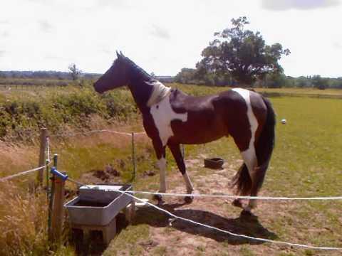 Xxx Mp4 Paint Horse Pony Xx 3gp Sex