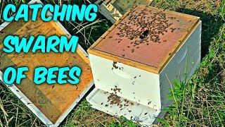 How to Catch a Swarm of Bees?
