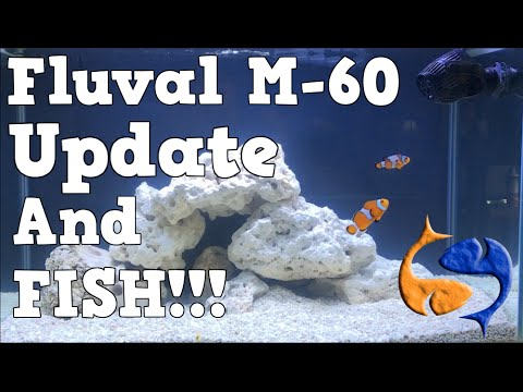Fluval M-60 Saltwater Tank Update and FISH!! KGTropicals!!!