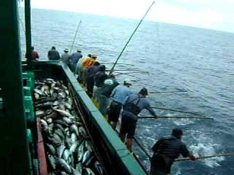 pesca artesanal del atun