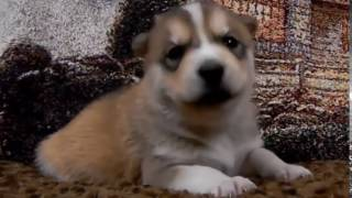 Funny Dogs Compilation Videos   Cute Puppy Videos Free