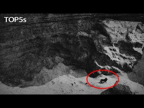 Xxx Mp4 5 Last Ever Photos Amp Video Footage Of Now Extinct Animals 3gp Sex