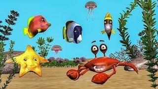 Funny Happy Birthday Song. Fish sing Happy Birthday To You