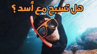 السباحة مع الأسود 🦁 Swimming with Lions #عمر_يجرب