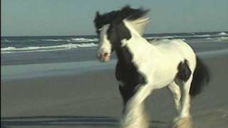 horse  country  music