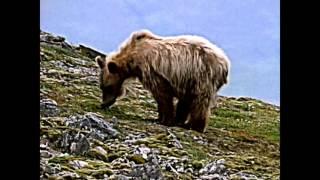 Life of Bears