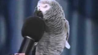 Intelligent Parrot