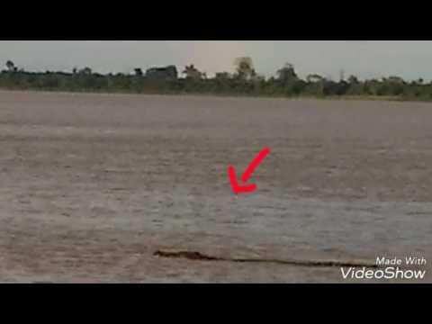 Big saltwater croc at Batang Lupar Sarawak