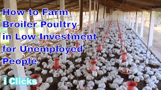 2017 How to Starts Latest Broiler Poultry (Chicken) Simple very easy Method Marketing bussiness 2017