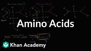 Introduction to amino acids | Macromolecules | Biology | Khan Academy