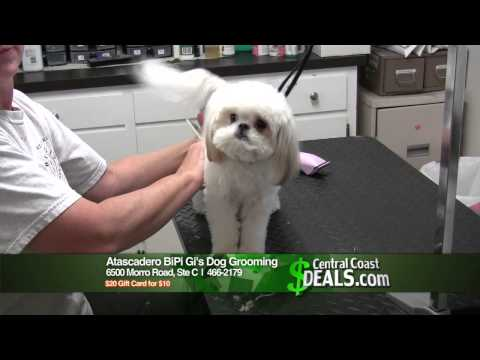 Xxx Mp4 Atascadero BiPi Gi S Dog Grooming BiPi Gis CC Deals HD 3gp Sex