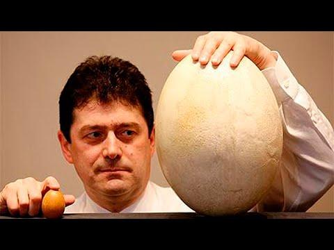 фото самых больших мужских яиц