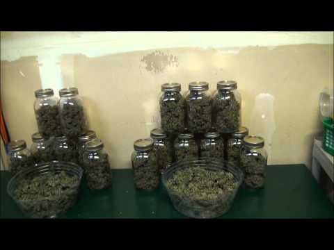 Growing Weed In My Closet Final Harvest and Smoke Reports