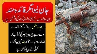 Benefits of Small Animals and Reptiles - Purisrar Dunya